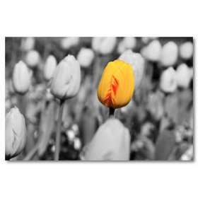 Αφίσα (φύση, λουλούδια, τοπίο)